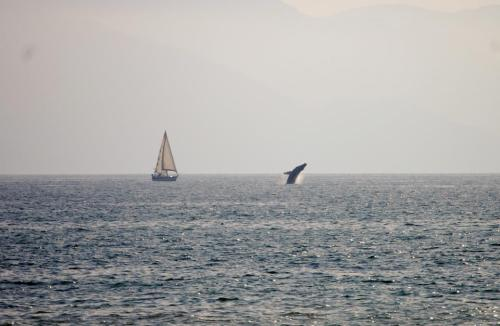 Whale Photo from NOAPV Guest