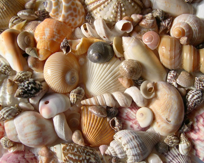 Are-you-a-Social-Media-Seashell